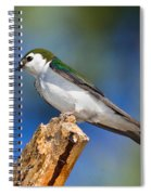 Male Violet-green Swallow Spiral Notebook