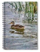 Mallard By The Reeds Spiral Notebook