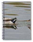 Mallard Drake And Hen Spiral Notebook