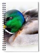 Mallard Drake Spiral Notebook