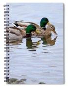 Mallard Ducks Spiral Notebook