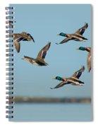 Mallard Flock Flying Spiral Notebook