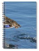 Mallard Hen Spiral Notebook