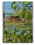 Mallard Mom And The Kids Spiral Notebook