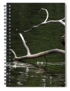 Mallard Standing Post Spiral Notebook