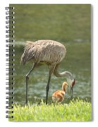 Mama And Chick Spiral Notebook