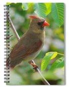 Mama Cardinal Spiral Notebook