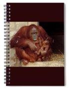 Mama N Baby Orangutan - 54 Spiral Notebook