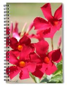 Mandevilla Named Sun Parasol Crimson Spiral Notebook