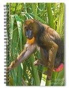 Mandrill Female Spiral Notebook