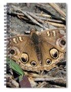 Mangrove Buckeye  Spiral Notebook