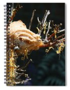 Mantids Hatch Spiral Notebook