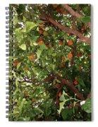 Many Orange On Tree Spiral Notebook