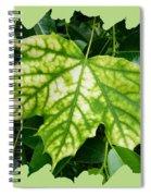 Maple Leaf In The Laurel Spiral Notebook