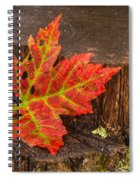 Maple Leaf On Oak Stump Spiral Notebook