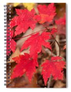 Maple Leaf Palette Spiral Notebook