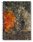 Maple Leaf - Playful Sunlight Patterns Spiral Notebook