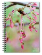Maple Leaf Seed Pods   Spiral Notebook