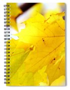 Maple Leaves At Autumn Glory 1 Spiral Notebook
