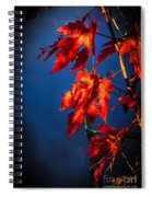 Maple Leaves Shadows Spiral Notebook
