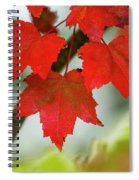 Maple Leaves Show Off Their Autumn Hues Spiral Notebook
