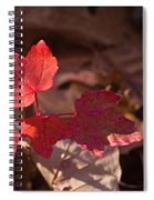 Maple Morning Spiral Notebook