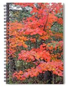 Maple Rush In The Fall Spiral Notebook