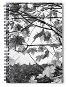 Maple Sunset - Paint Bw Spiral Notebook