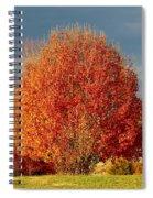 Maple Tree Spiral Notebook