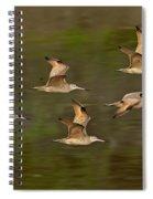 Marbled Godwit Flock Flying Spiral Notebook