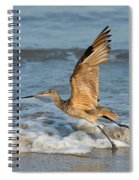 Marbled Godwit Taking Off On Beach Spiral Notebook