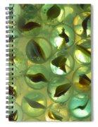 Marbles Cat Eyes Soda 1 B Spiral Notebook