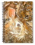 March 025 0 Rabbit Eyes Looking Spiral Notebook