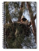 Marco Eagle - Protecting Its Nest Spiral Notebook