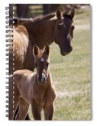 Mare And Foal   #0659 Spiral Notebook