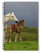 Mare And Foal, Co Derry, Ireland Spiral Notebook