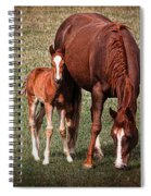 Mare With Foal Spiral Notebook