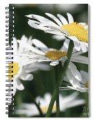 Marguerite Blossom Spiral Notebook