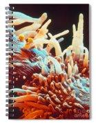 Marigold Petal Sem Spiral Notebook