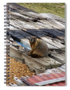 Marmot Resting On A Railroad Tie Spiral Notebook