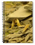 Marmots Playing Spiral Notebook