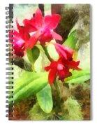Maroon Cattleya Orchids Spiral Notebook