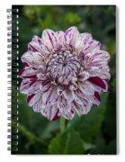 Maroon Speckled Dahlia Spiral Notebook