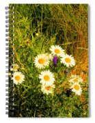 Marshall Point Daisies Spiral Notebook