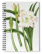 Mary Lou Amaryllis Spiral Notebook