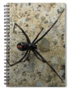 Maryland Black Widow Spiral Notebook