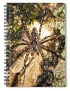 Brown Fishing Spider Spiral Notebook