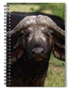 Masai Mara Buffalo Spiral Notebook