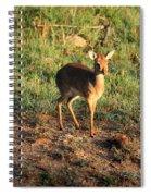 Masai Mara Dikdik Deer Spiral Notebook