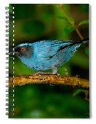 Masked Flower-piercer Spiral Notebook